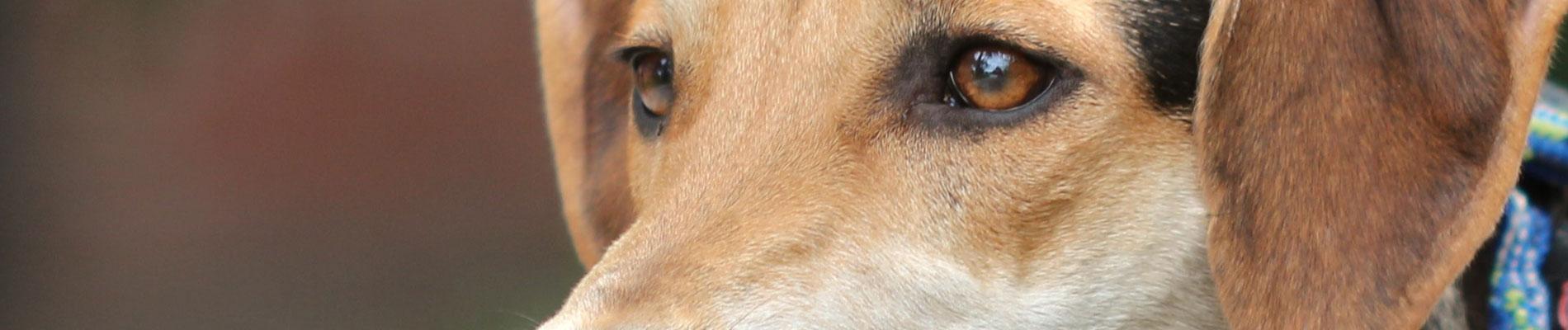 Banner-Patenhunde